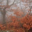 Stock Photo: Misty forest in autumn