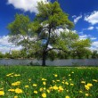 Tree in a field with dandelions — Stock Photo