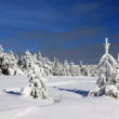 Winter forest in the mountain — Stock Photo