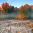 Stock Photo: Hoar frost at dawn on edge of forest