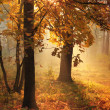 Stock Photo: Misty morning in autumn forest