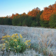 Stock Photo: Frost on trees in autumn dawn
