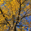Stock Photo: Tree foliage in autumn colors