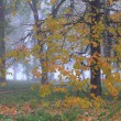 Stock Photo: Misty autumn forest