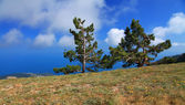 Ağaç üzerinde mavi gökyüzü arka planda dağlar — Stok fotoğraf