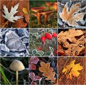 秋天的树叶和蘑菇的抽象拼贴画 — 图库照片