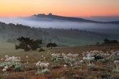 Misty sunrise in the mountain — Stock Photo