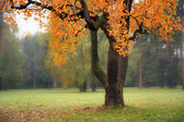 Old tree in fog in autumn — Stock Photo