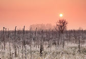 Autumn sunrise on the frozen field — Stock Photo