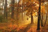 Foresta nebbiosa autunnale — Foto Stock