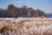 Alba d'autunno su theedge della foresta — Foto Stock