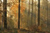 туманный осенний лес — Стоковое фото