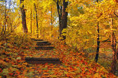 Stairways in autumn park — Stock Photo
