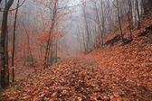 Lane in the misty forest in autumn — Stock Photo
