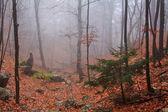 Foresta nebbiosa in autunno — Foto Stock