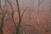 Misty forest in autumn — Stock Photo