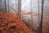 Misty forest in autumn — Stockfoto