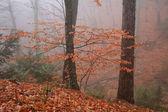 Golden autumn forest in the fog — Stock fotografie