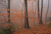 Golden autumn forest in the fog — Stock Photo