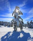 Verschneite bäume im wald in den bergen — Stockfoto