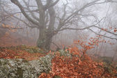 Misty forest in autumn — Stock fotografie