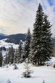 Nevoso inverno ai piedi delle alpi — Foto Stock