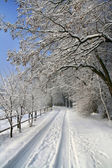 Snow-covered road in the countryside — Stock Photo