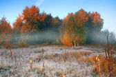 Hoar frost at dawn on the edge of the forest — Stock Photo