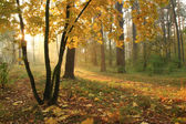 Misty sunrise in autumn forest — Stock Photo