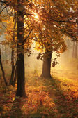 Misty morning in autumn forest — Stock Photo