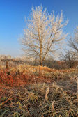 Tree in rime at sunrise in autumn — Stock Photo
