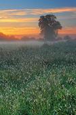 Zamlžené letní ráno — Stock fotografie