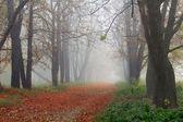 Misty autumn forest — Stock Photo