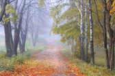 Misty autumn alley — Stock Photo