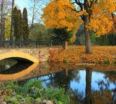 осень в парке японский — Стоковое фото