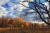 Autumn forest — Zdjęcie stockowe