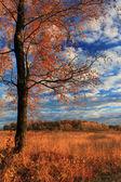 阳光明媚的秋日 — 图库照片