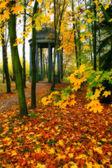 Misty autumn — Stock Photo