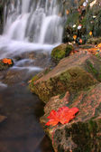 Herfst valt — Stockfoto