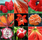 Collage of red flowers — Stock Photo