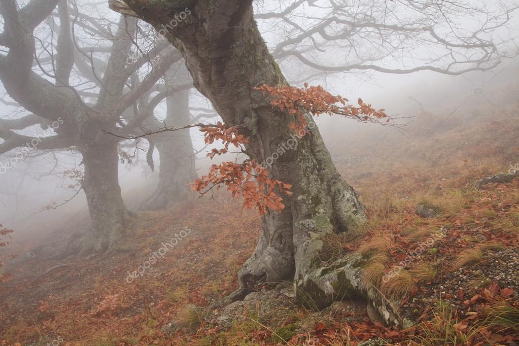 Фотообои Старое дерево в тумане осенью