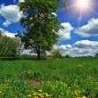 Stock Photo: Tree in a field with dandelions