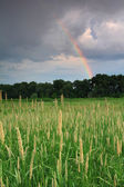 Rainbow over the field — Stock Photo