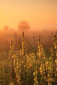 Misty sunrise on the field — Stock Photo