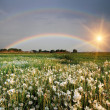 Stock Photo: Rainbow over field with flowers