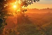 Rays of the rising sun — Stock Photo