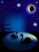 Lake with swans in the night sky — Stock Vector