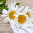 Ox-eye daisy on vintage cloth with handmade ribbons — Stock Photo