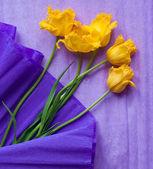 Cartão postal com tulipas amarelas sobre fundo violeta — Fotografia Stock