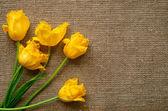 Kartpostal ile kumaş çuval bezi üzerinde Sarı laleler — Stok fotoğraf